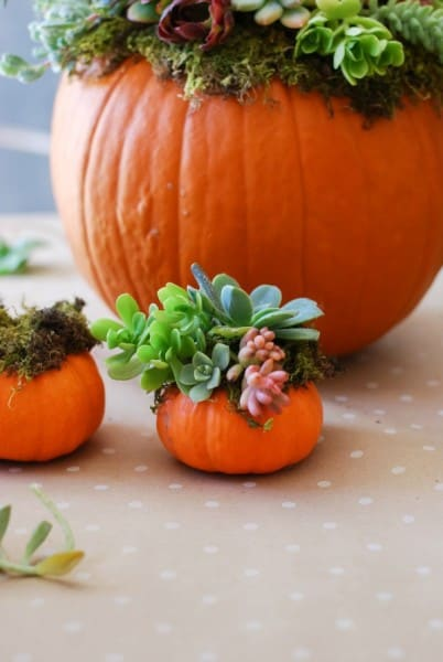 Pumpkin-Succulent-Arrangement-simplyhappenstance.com-82